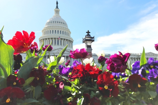 Flowers in front of the Capitol Building.